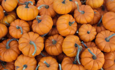 PTO Pumpkin Fair - Save the Date - Saturday, October 17th